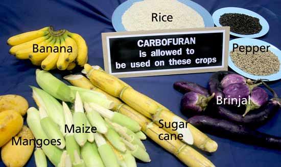 คำอธิบายภาพ : furadan-crops